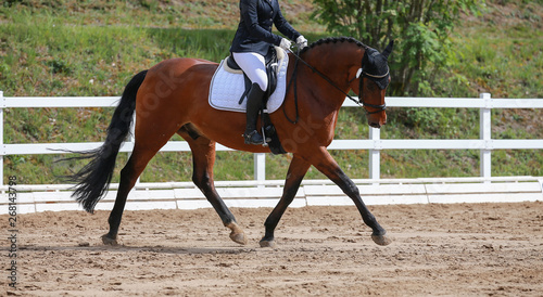 Foto op Canvas Paarden Dressage horse (horse) trotting in a dressage tournament..