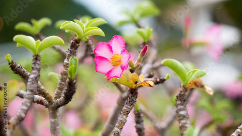 Garden Poster Narcissus flower in nature