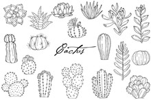 Big Set Of Elements With Hand Drawn Cacti On White Background