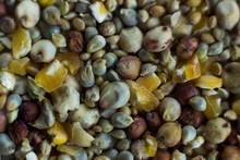 Close Up Of Wild Bird Seed