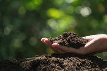 Hand Of Male Holding Soil In The Hands For Planting.