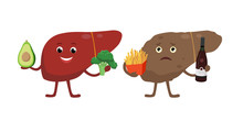 Healthy And Unhealthy Liver Cartoon Characters Isolated On White. Cheerful Liver With Healthy Vegetarian Food And Sick Liver Holding Bad Products For Its Health, With Cirrhosis. Medical Illustration.