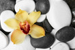 canvas print picture Beautiful orchid flower among different spa stones, top view. Space for text