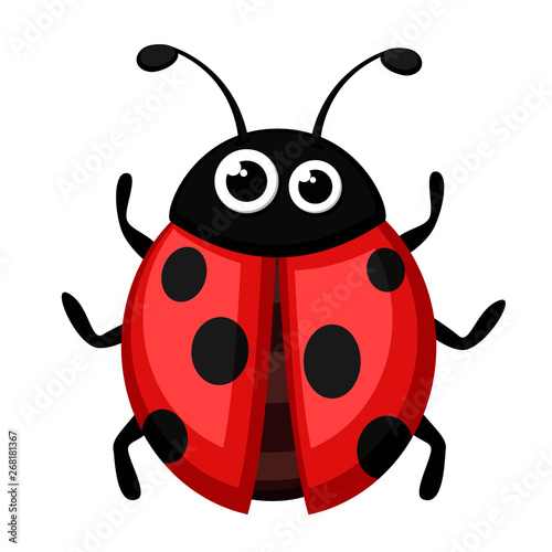 Ladybug beetle on a white. The form of the top. Poster Mural XXL