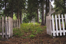 Fenced Graves In A Dense Lush Forest