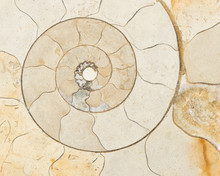 Ammonite Fossil Patterns, Clos...
