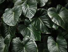 Closeup Of Leaves Of Tropical ...