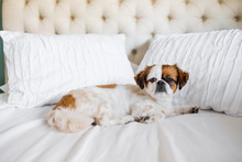 Cute Dog Sleeping On The Bed