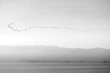 Birds Flying Over Lake In A Row.