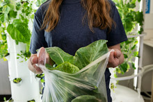Gardening: Student Holding Greens Harvested From Tower Garden
