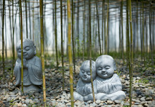 Small Buddha Statue In Bamboo Forest