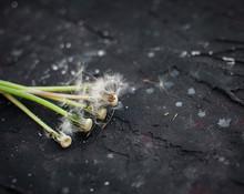 Dandelions On A Dark Backgrou...
