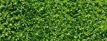 Garden With Green Leaf,