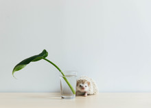 Cute Hedgehog On Table With Single Leaf In Glass, Very Artistic!