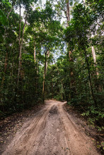 Sandy Track In A Rainforest