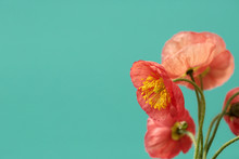 A Bouquet Of Vibrant Pink And ...