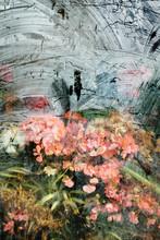 Flowers In A Shop Window