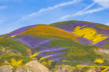 Painted Hills Of The Carrizo Plain