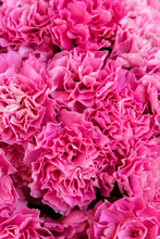 Bouquets Of Colorful Pink Carnations On The Market
