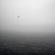 Gull Glide