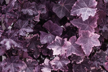 Infrared: Abstract Plant Leaves