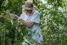 Volunteer Removes Invasive Species From Banks Of Milwaukee River,
