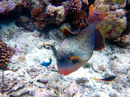 Fisch im Ozean Canvas Print