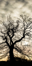 Tree Shadows Sky
