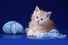 Cute Fluffy Kitten With A Ball Of Yarn