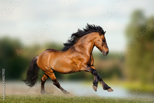 Fototapeta Wild stallion on nature obraz