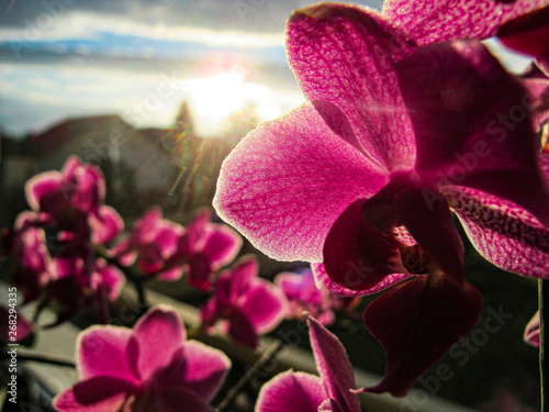 Door stickers Orchid Orchidee mit Sonneneinstrahlung