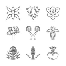 Desert Plants Linear Icons Set