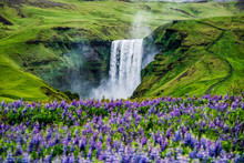 Beautiful Scenery Of The Majestic Skogafoss Waterfall In Countryside Of Iceland In Summer. Skogafoss Waterfall Is The Top Famous Natural Landmark And Tourist Destination Place Of Iceland And Europe.