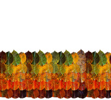 Autumn Leaves From Rainbow Of ...