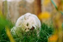 Cat Eating Grass In The Garden