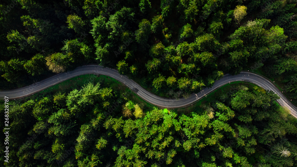 Fototapeta Winding road trough dense pine forest. Aerial drone view, top down