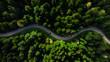 Leinwandbild Motiv Winding road trough dense pine forest. Aerial drone view, top down