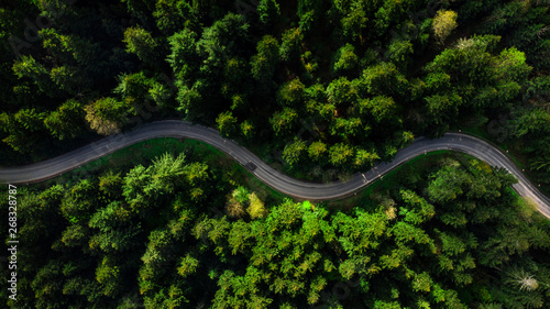 Fototapety, obrazy: Winding road trough dense pine forest. Aerial drone view, top down