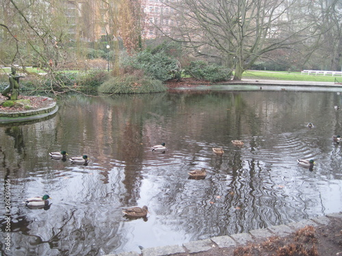 Fototapeten Natur Winter view of the park with a pond and a lot of ducks in Karlovy Vary, Czech Republic.