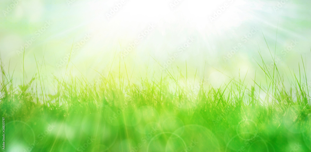 Fototapeta natur gras texturen banner bokeh