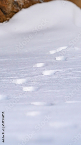 Valokuvatapetti Vertical Nature scenery with a close up of animal tracks on powdery snow in wint