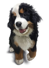 Bernese Mountain Dog. Watercol...