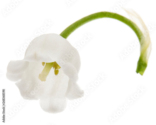 Foto auf AluDibond Maiglöckchen White flower of lily of the valley, lat. Convallaria majalis, isolated on white