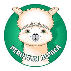 Cute peruvian alpaca. Vector illustration.