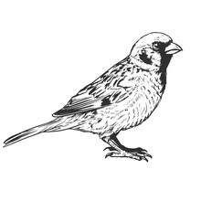 Little Realistic Sparrow Bird Illustration