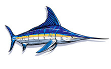 Marlin Swordfish. White Backgr...