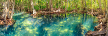 Mangrove And Crystal Clear Wat...