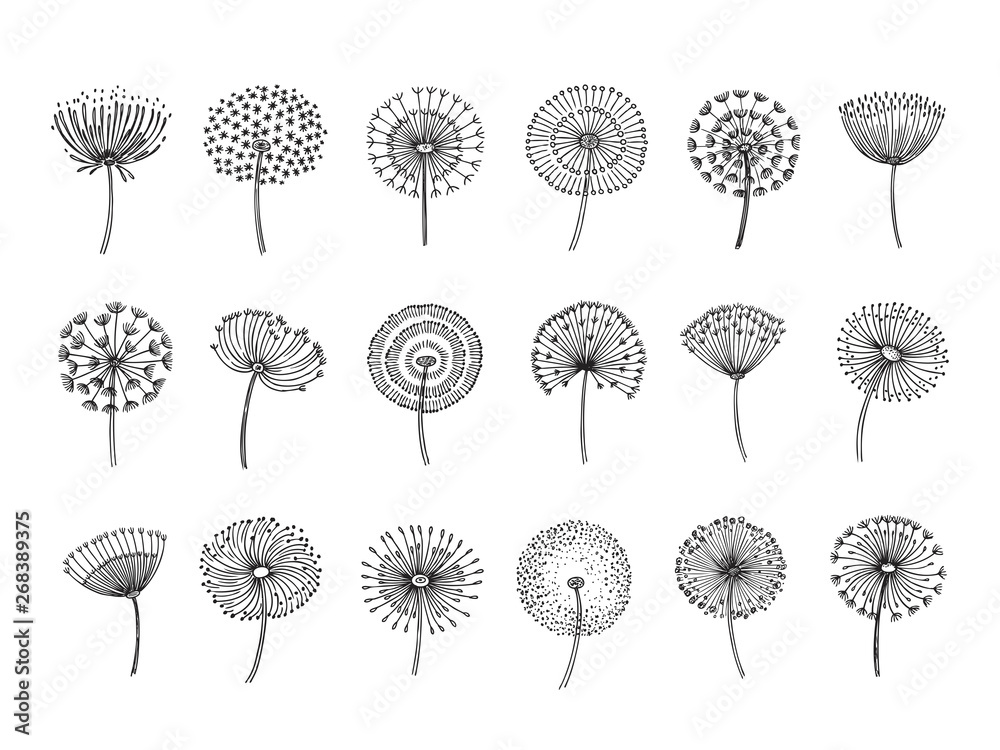 Fototapety, obrazy: Dandelion set. Doodle hand drawn dandelions monstera delicate plant seeds summer botanical fluff flower isolated vector silhouettes. Illustration of dandelion fluff, botanical flower softness