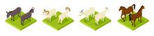 Isometric Hoofed Cattle. Dunke...