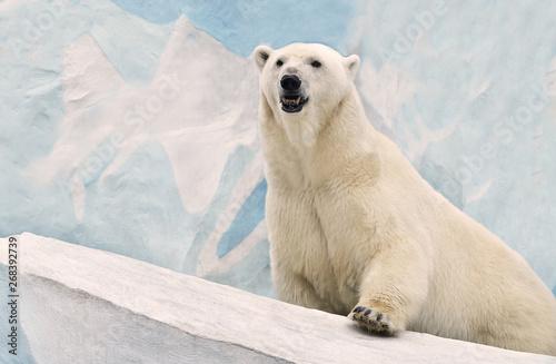 Foto op Aluminium Ijsbeer polar bear